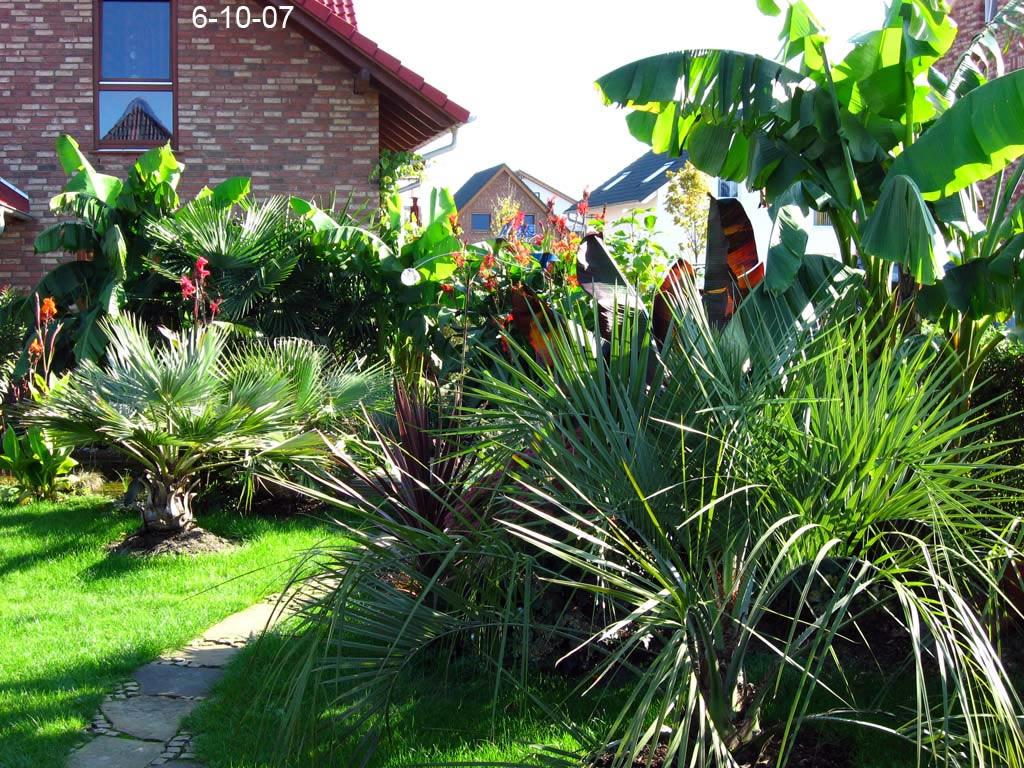 Garten 2007 exoten und palmen claus willich - Garten mit palmen gestalten ...