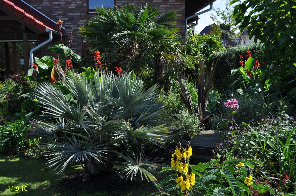 palmen im garten bild kleine palmen im garten zu. Black Bedroom Furniture Sets. Home Design Ideas