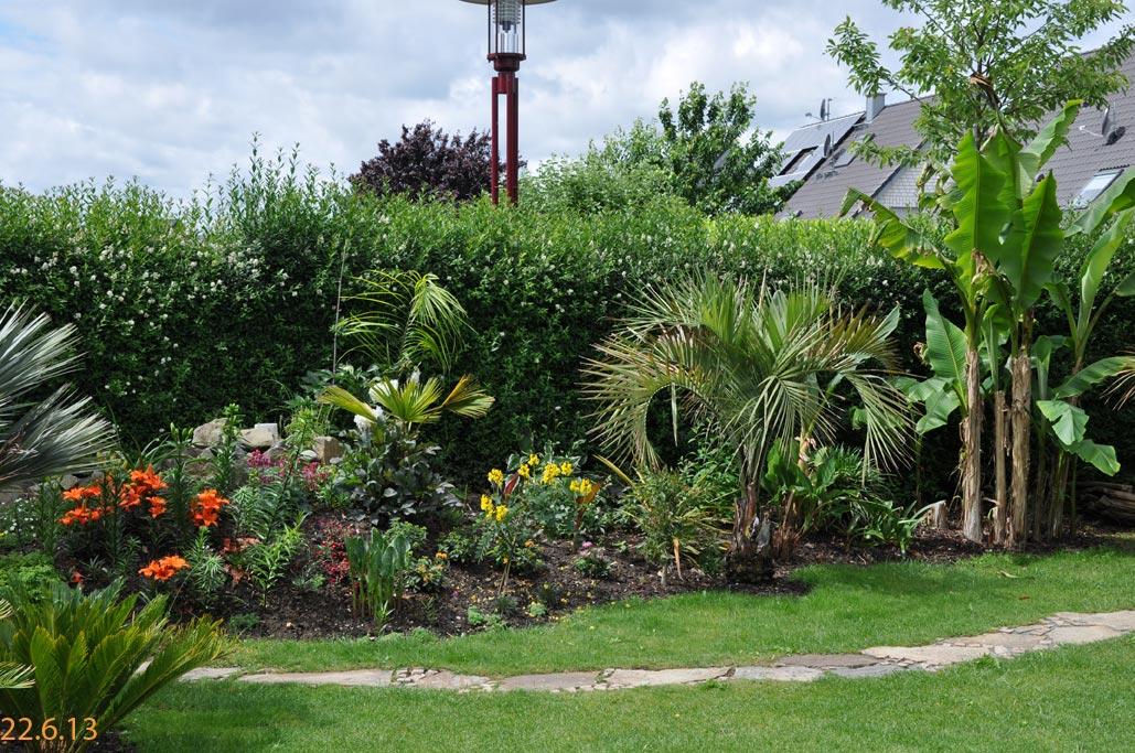palmen im garten pflanzen palme im garten pflanzen new garten ideen palme im garten pflanzen. Black Bedroom Furniture Sets. Home Design Ideas