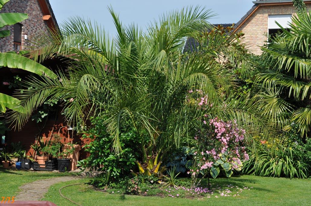 palmen und co julibilder albizze bl ht. Black Bedroom Furniture Sets. Home Design Ideas