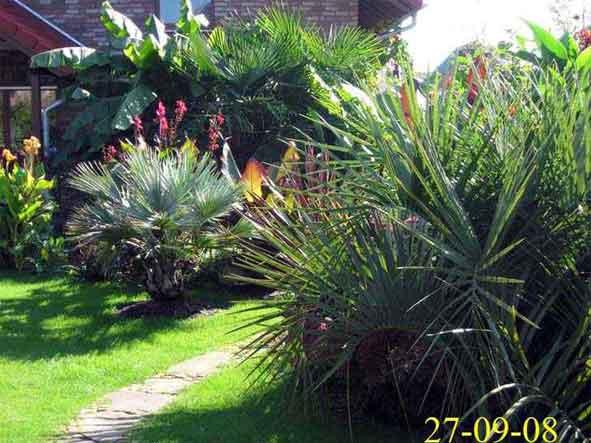 palmen und exotische pflanzen in willich. Black Bedroom Furniture Sets. Home Design Ideas
