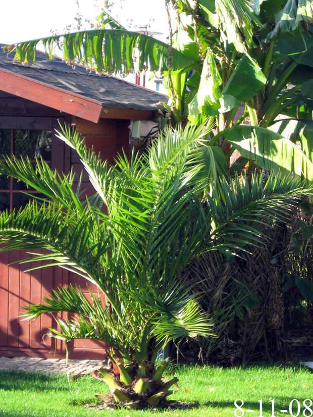 wohnzimmer palme schneiden pflanzen im schlafzimmer tipps. Black Bedroom Furniture Sets. Home Design Ideas