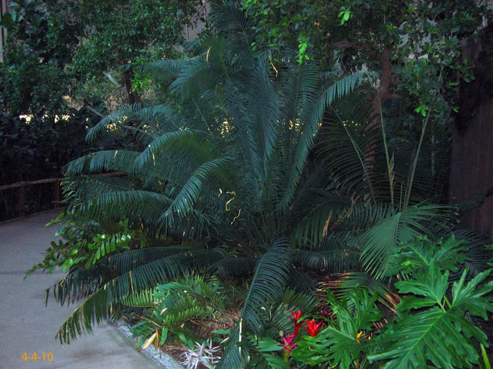 tropical island exoten und palmen claus willich. Black Bedroom Furniture Sets. Home Design Ideas